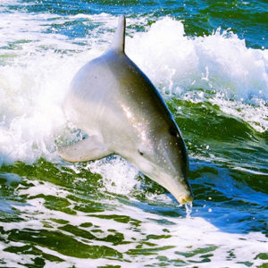 dolphin incursions